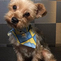 Adopt A Pet :: Stalling - McKinney, TX