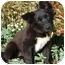 Photo 2 - Husky/Border Collie Mix Puppy for adoption in Los Angeles, California - Nina von Kern