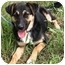 Photo 3 - German Shepherd Dog/Border Collie Mix Dog for adoption in Dripping Springs, Texas - Nana