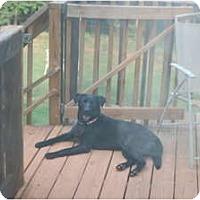 Adopt A Pet :: Jilly - Seneca, SC