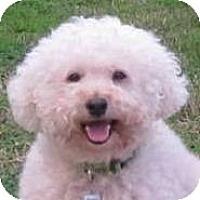 Adopt A Pet :: Petey - La Costa, CA