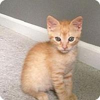 Adopt A Pet :: Glavin - Monroe, GA