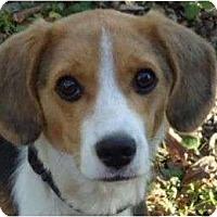 Adopt A Pet :: Thor - Allentown, PA