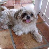 Adopt A Pet :: Magoo - miami beach, FL