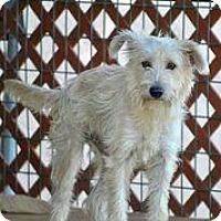 Adopt A Pet :: Captain Tom - Austin, TX