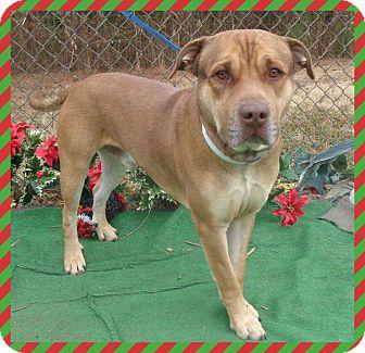 Shepherd (Unknown Type)/Labrador Retriever Mix Dog for adoption in Marietta, Georgia - DILLON (R)