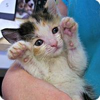 Adopt A Pet :: Winona - Toledo, OH