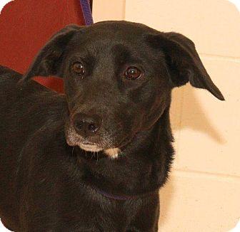 Retriever (Unknown Type) Mix Dog for adoption in McDonough, Georgia - Pilar