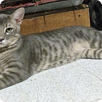 Adopt A Pet :: LITTLE MISTER - Acme, PA
