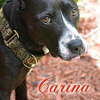 Adopt A Pet :: Carina - Eden, NC