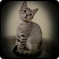 Adopt A Pet :: Judith - Richmond, VA