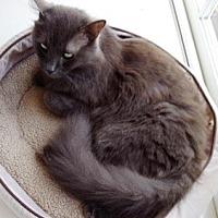 Adopt A Pet :: Laura - Orange, CA