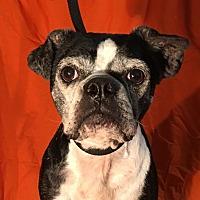 Adopt A Pet :: Liberty - Indian Trail, NC