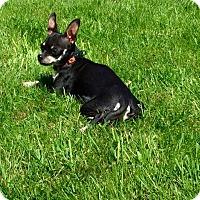 Adopt A Pet :: Rita - Bellingham, WA