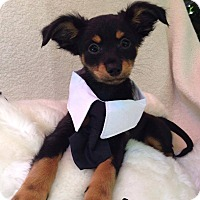 Adopt A Pet :: Jesse - Monrovia, CA