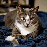 Adopt A Pet :: Dylan - Bealeton, VA