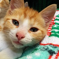 Adopt A Pet :: Sebastian - Grants Pass, OR
