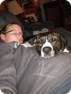 American Pit Bull Terrier/Labrador Retriever Mix Dog for adoption in Chicago, Illinois - Meka