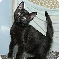 Adopt A Pet :: Yogi - New York, NY