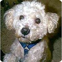 Adopt A Pet :: RUPERT - dewey, AZ