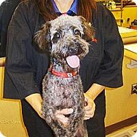 Adopt A Pet :: Edwin - Jacksonville, FL