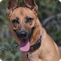 Adopt A Pet :: Libby - Altadena, CA