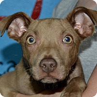Adopt A Pet :: Hennessy - Meridian, ID