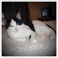 Adopt A Pet :: KULLEN - Medford, WI