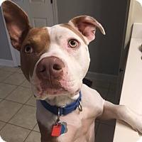 Adopt A Pet :: Floyd - McCalla, AL