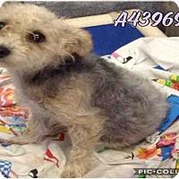 Adopt A Pet :: A439695 - San Antonio, TX