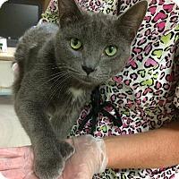 Adopt A Pet :: Hemingway - Fremont, OH
