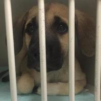 Adopt A Pet :: Casey - Gainesville, FL