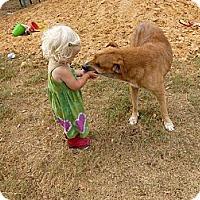 Adopt A Pet :: Trixie - Katy, TX