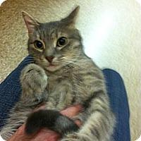 Adopt A Pet :: Guss - Monroe, GA