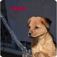 Adopt A Pet :: Betsy - New Boston, NH
