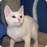 Adopt A Pet :: K-Gail1-Nickoli - Colorado Springs, CO
