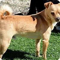 Adopt A Pet :: Nacho - Acton, CA