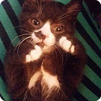 Adopt A Pet :: Pierre - North Highlands, CA