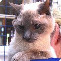 Adopt A Pet :: Milo - Davis, CA