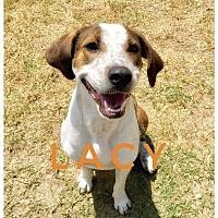 Adopt A Pet :: LACY - Ocala, FL