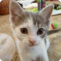 Adopt A Pet :: AVALON - Medford, WI