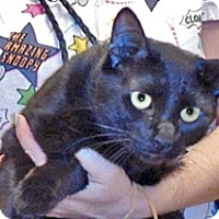 Adopt A Pet :: Bentley - Wildomar, CA