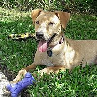 Adopt A Pet :: Alma - Jacksonville, FL