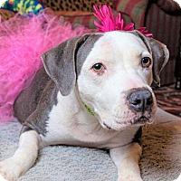 Adopt A Pet :: LULA - Brattleboro, VT