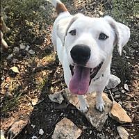 Adopt A Pet :: Blanco - Austin, TX