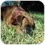 Photo 3 - Boxer Dog for adoption in Brunswick, Georgia - Nina