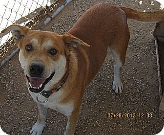Husky/Shepherd (Unknown Type) Mix Dog for adoption in Littlerock, California - Cisco