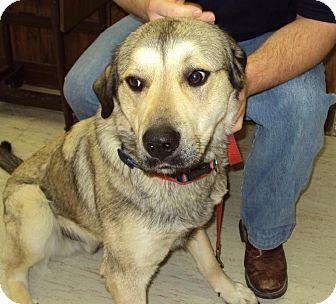 Husky/Shepherd (Unknown Type) Mix Dog for adoption in Mt. Vernon, Illinois - Paprika