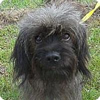 Adopt A Pet :: TRINITY - Shirley, NY