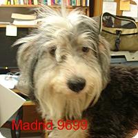 Adopt A Pet :: Madrid - Greencastle, NC
